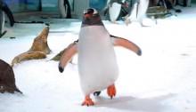 disney-club-penguin-placeholder-header